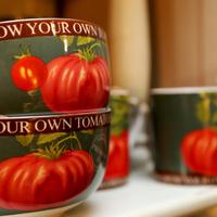 Porcelain teacups - Huis de zomer -brugge